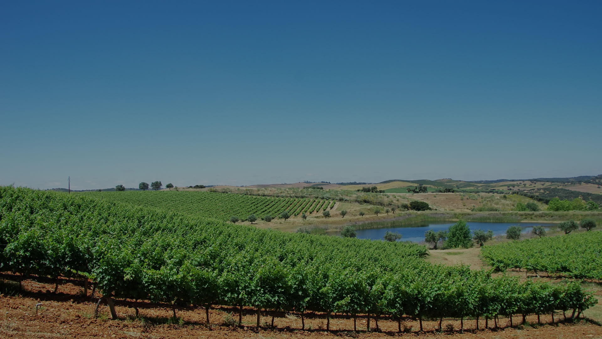 Portugal has a long wine history and traditions dating from times earlier than the country's foundation.